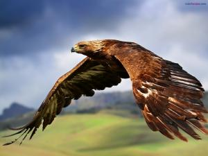 Majestic flight