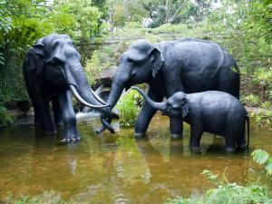 Family of elephants enjoying the water