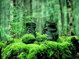 Boots covered with moss