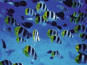 Shoal of tropical fish in the sea