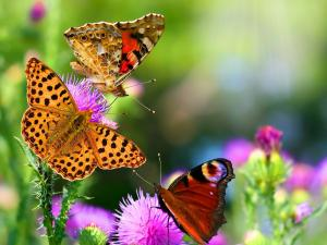 Multicolored butterflies perched on flowers