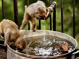 Playful monkeys