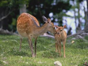 Fawn with her mother