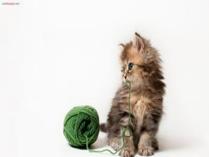 Kitten with a ball of wool