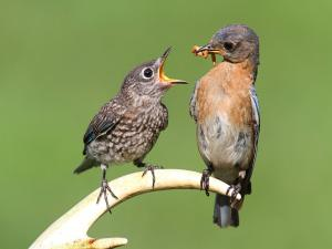 Bird feeding its young