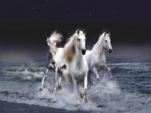 White horses emerging from the sea