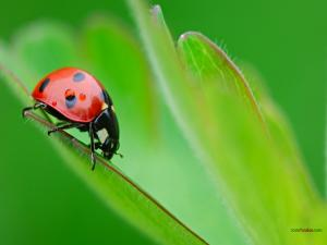 Ladybug clinging to a green leaf