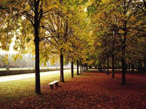 Alameda in autumn