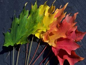 Spectrum of color in the leaves