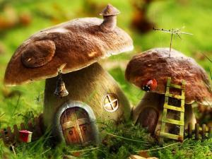 Living in a mushroom