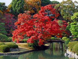 Oriental garden with a tree of red leaves
