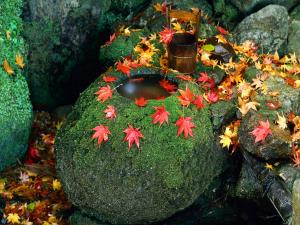 Fallen leaves over mossy stones
