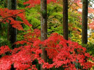 Branches of red leaves