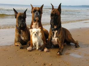 Four dogs sitting at the seaside