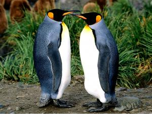 A couple of penguins face to face