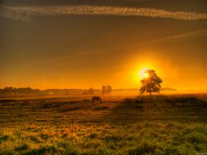 The Sun tinting golden the field