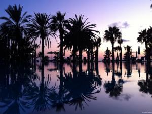 Palm grove flooded