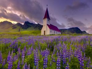 Church of mountain facing a meadow of lupine flowers