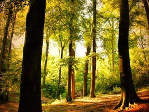 Beech forest in Wuppertal, Germany