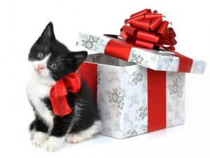A kitten of gift