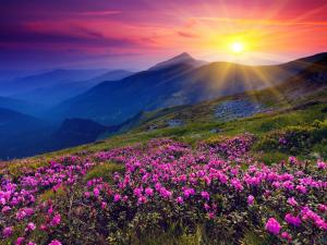 Wildflowers witnessing the dawn