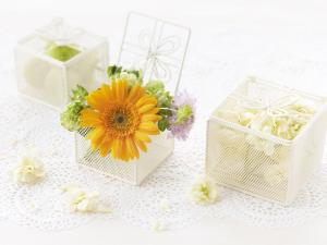 Flowers in small boxes