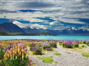 Lake Tekapo, in the South Island of New Zealand