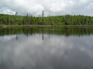 Lake surrounded of pines