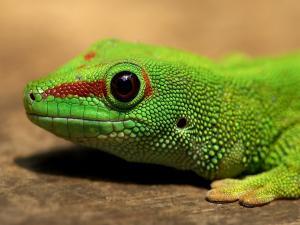 Head of a green lizard