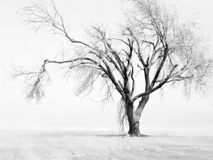 Leafless tree, in black and white