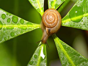 Snail in the center of a plant