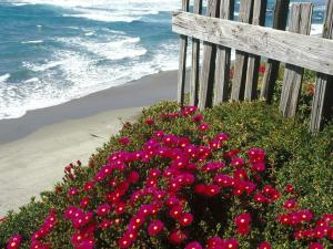 Red flowers at beachfront