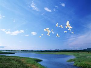 White doves flying under a blue sky