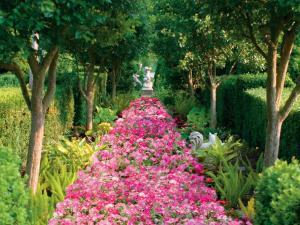 Path of pink flowers