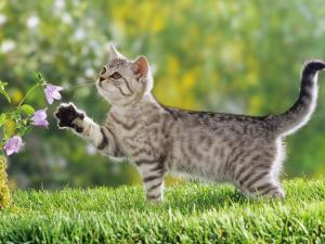 Curious kitten with some flowers