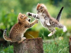 Catty fight