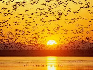 Birds taking flight up at sunset
