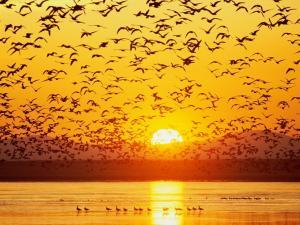 Birds taking flight up at sunset