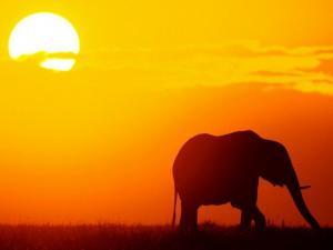Elephant under the sun of the african savanna