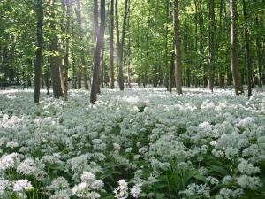 Forest of white flowers