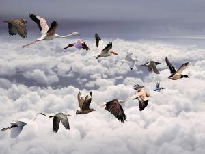 Different species of birds flying together in the sky