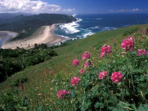 Flowers near to sea