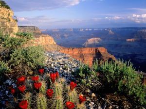 The Grand Canyon (Arizona, United States)