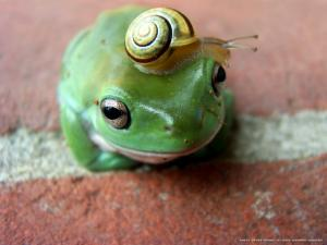 A frog with a snail for hat