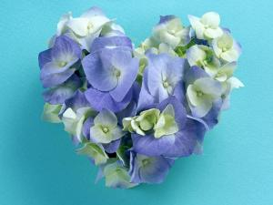 Heart of hydrangeas