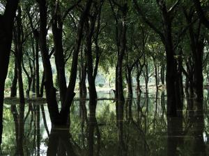 A forest flooded with water