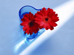 Red gerberas in a vase