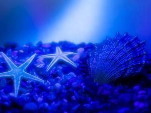 Blue seafloor