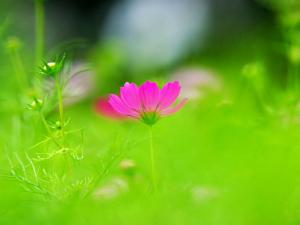 Pink flower among the green
