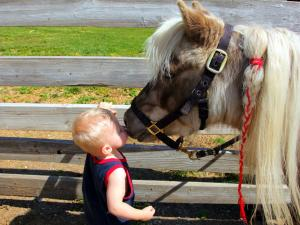 Blond child kissing a pony